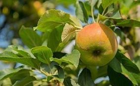 vendita alberi da frutto