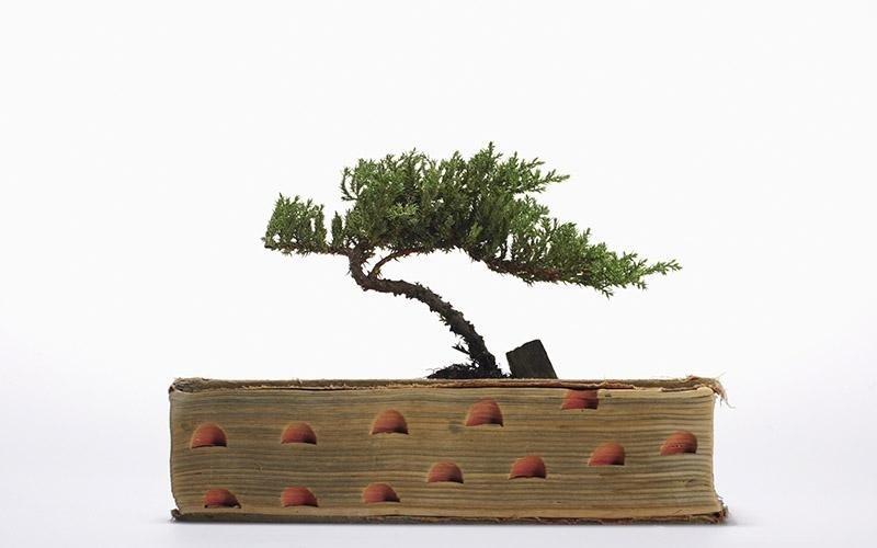 bonsai in Puglia