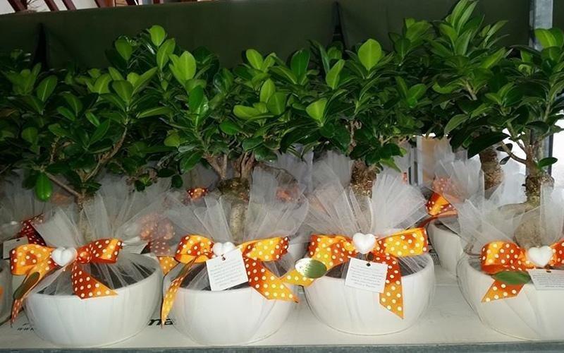 bomboniere con piante