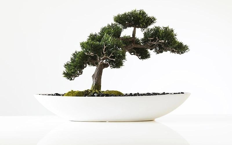 vendita mini bonsai