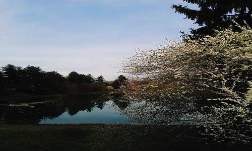 vista di un laghetto e degli alberi