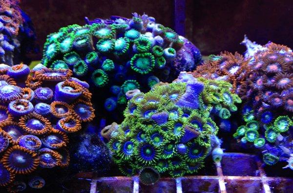Variety of sea aquatic plants