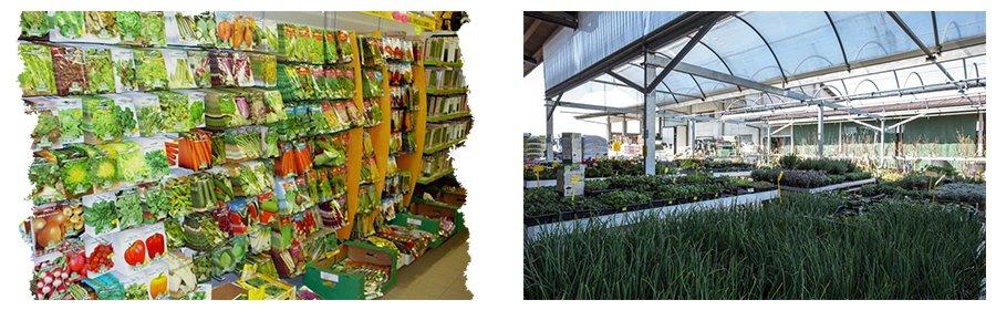 delle confezioni di semi per piante e delle piante con dell'erba in una serra