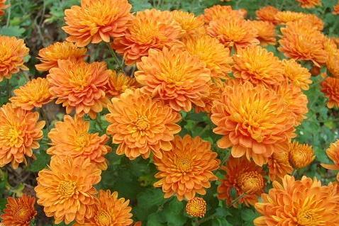 fiori da esterni