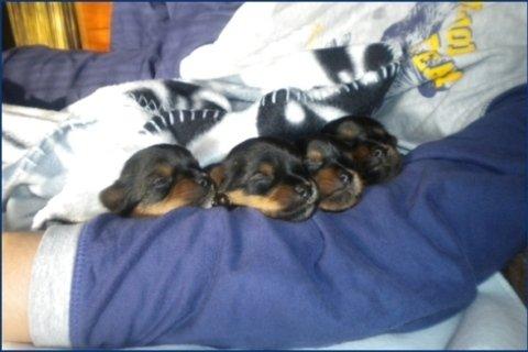 cuccioli svezzati