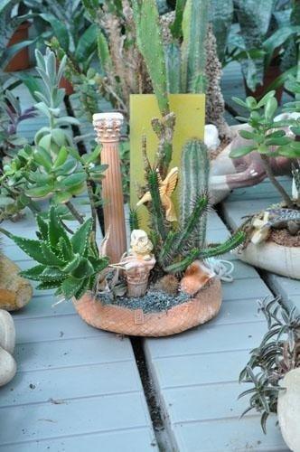 una composizione di cactus