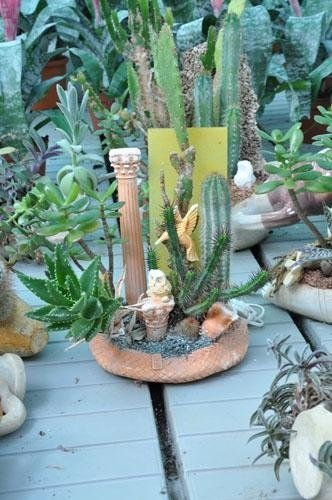 a composition of cacti and other plants