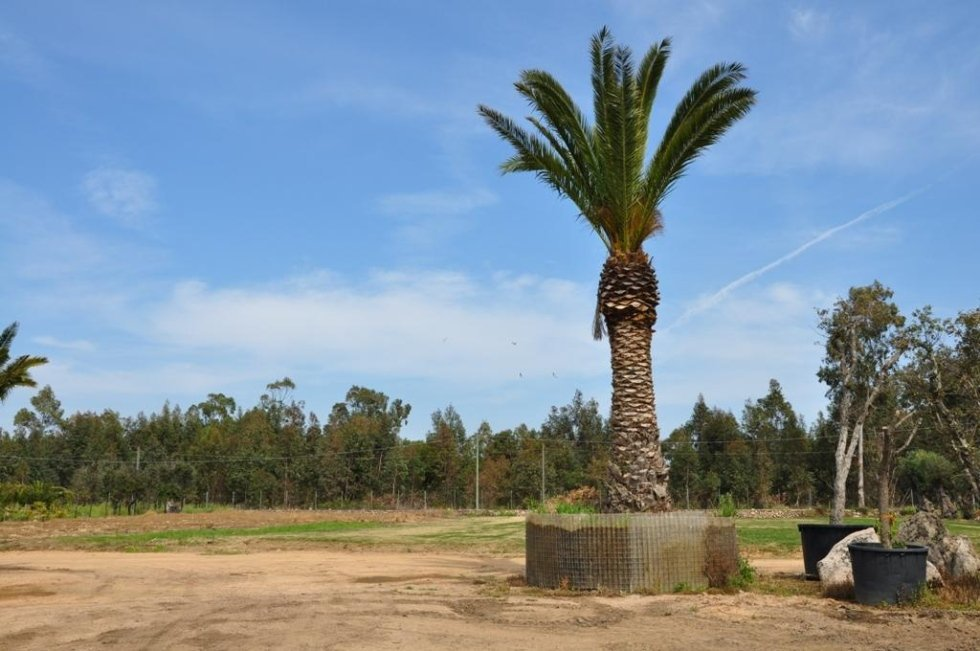 a palm and some soil