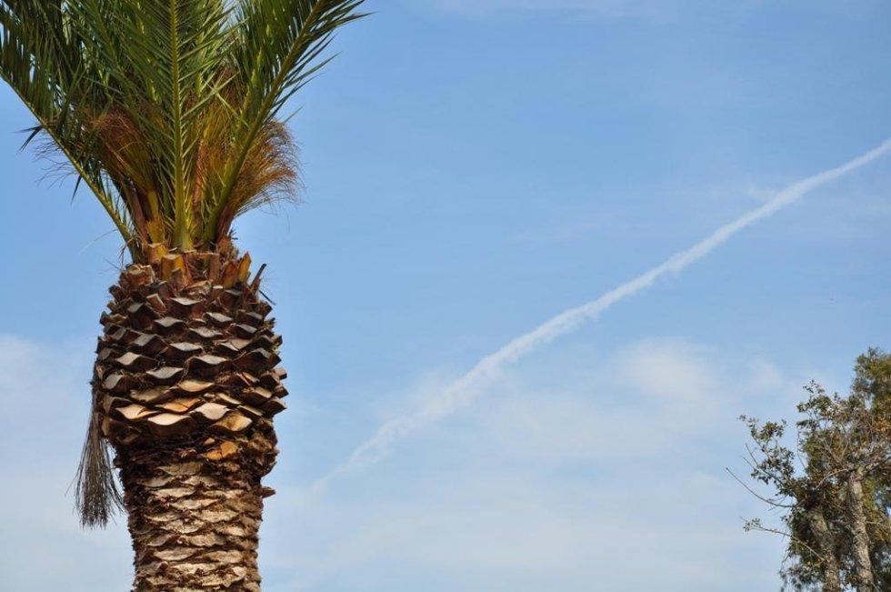 closeup view of a palm