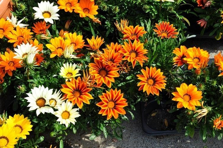 white, yellow and orange flowers