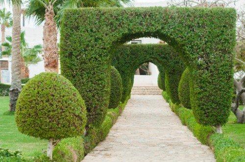 una camminata in un giardino con degli alberelli e delle siepi tagliate ad arco