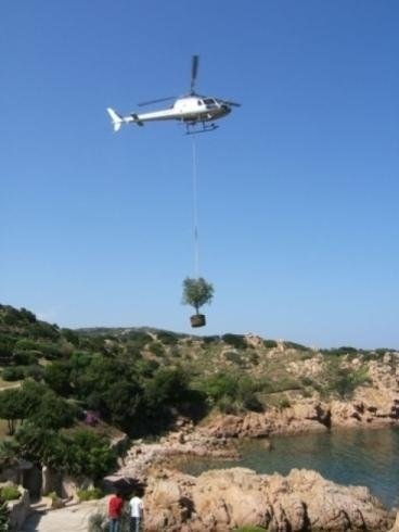 a helicopter with a rope transporting a plant