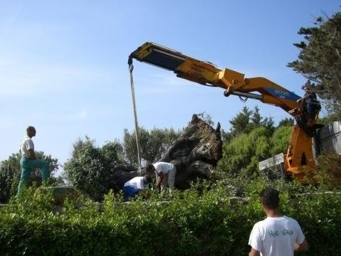 a crane with a rope and an olive tree
