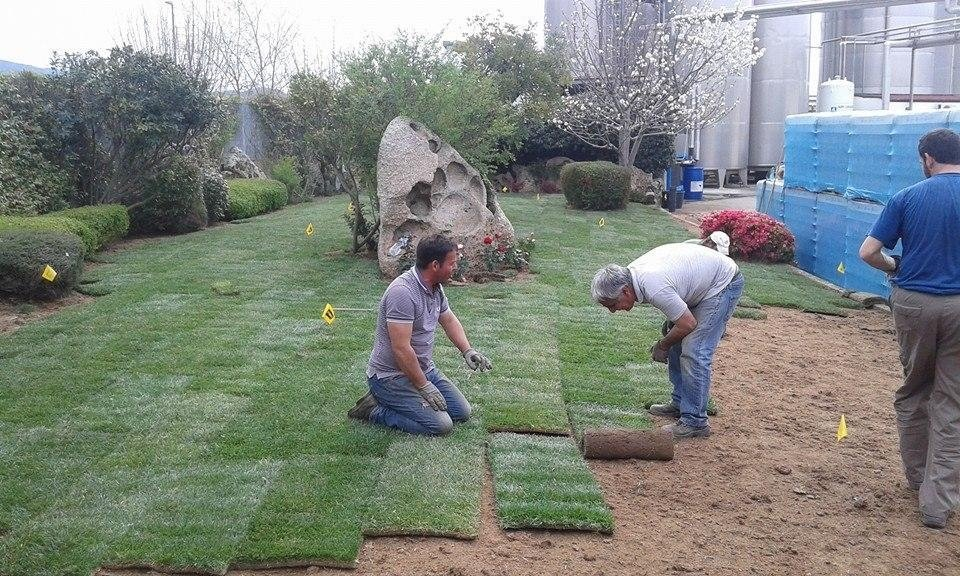 a kneeling gardener and one bending down in front while examining a yard