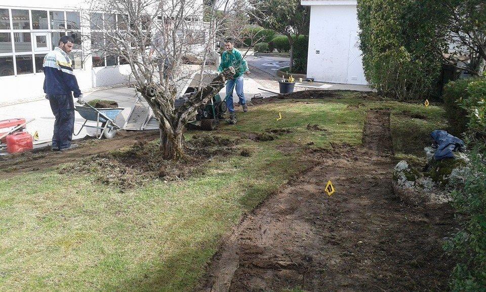 gardeners working in a yard