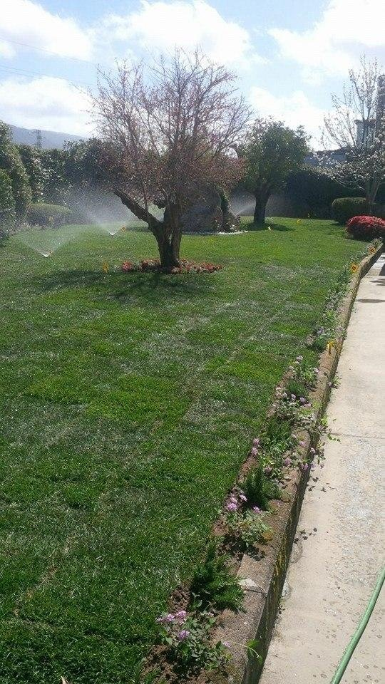 automatic irrigation in a yard with trees