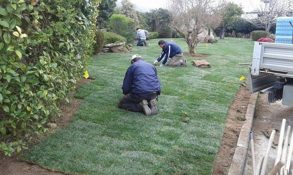 dei giardinieri inginocchiati che applicano degli strati di prato in un giardino