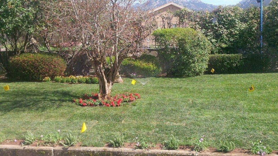 un prato con un albero e dei fiori rossi attorno
