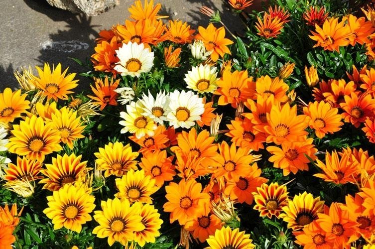 yellow, orange and white flowers