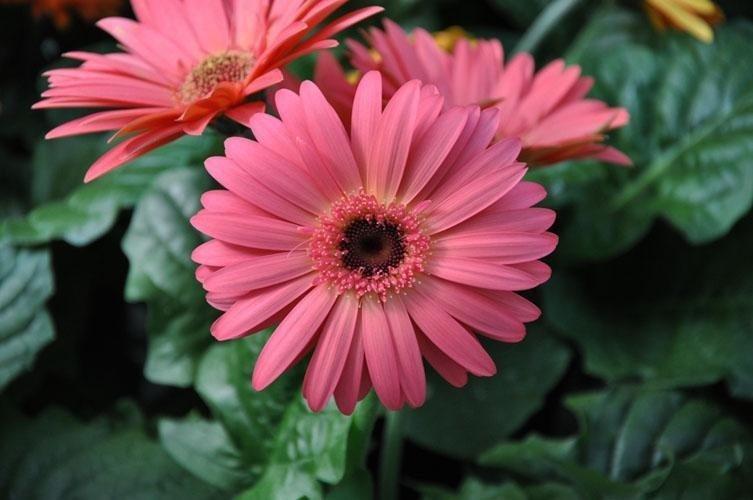 una pianta con deiuna pianta con dei fioi di color rosa  fioi di color rosa
