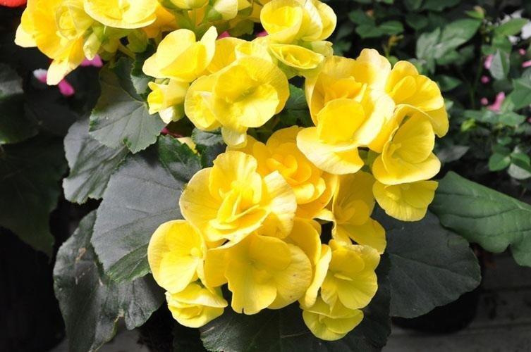 una pianta con dei fiori di color giallo