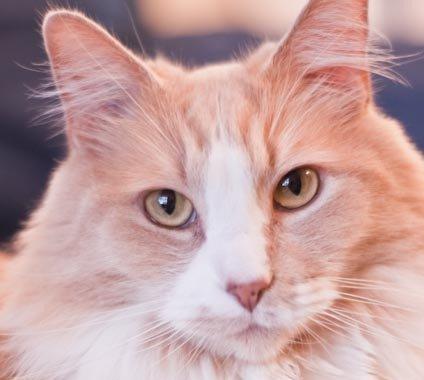 Cat looking towards camera
