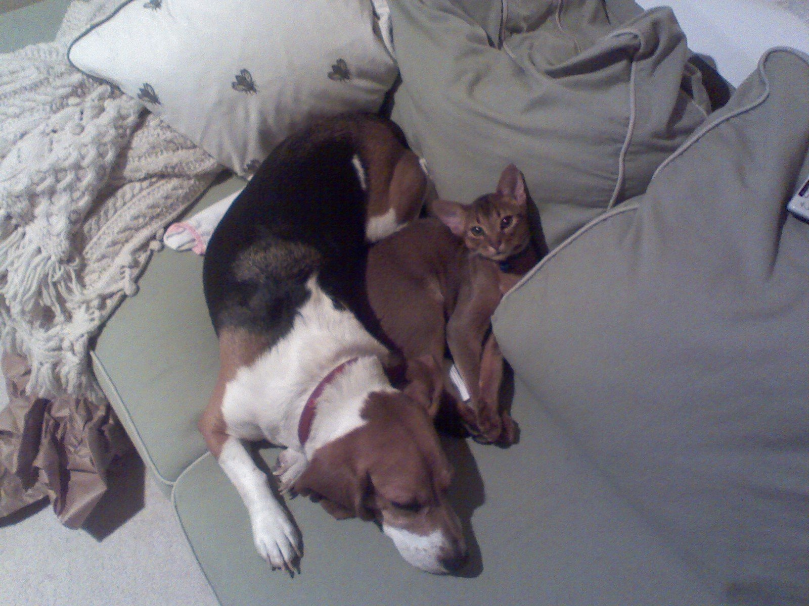 Dog and cat lying on a bed