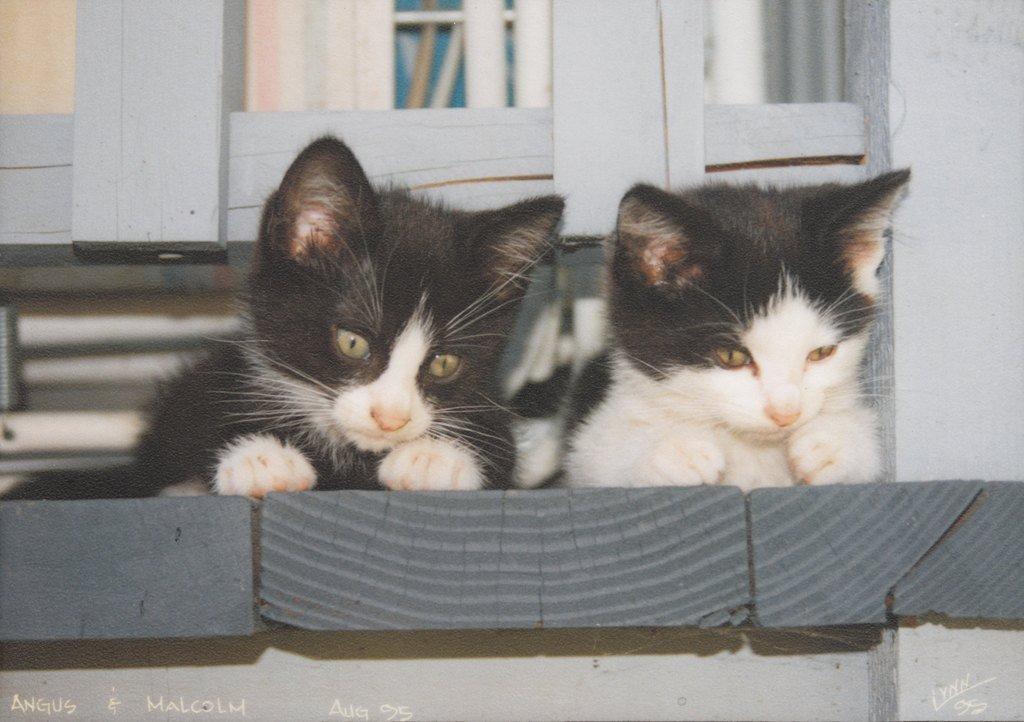 Two kittens on wooden ledge