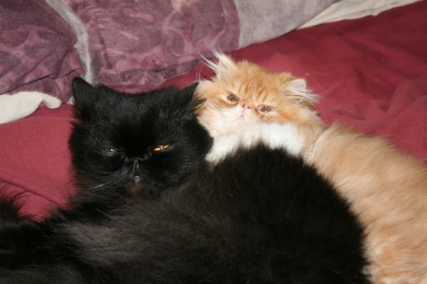 Two cats laying together