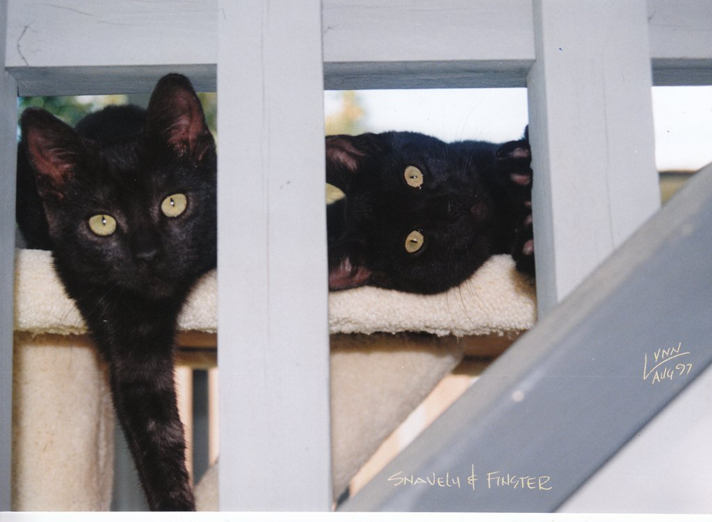 Two black cats peeping eyes through wooden posts
