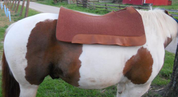 Horse contour on mutton withers