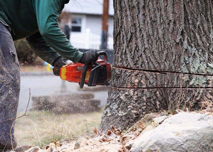 Big R Tree Service | Tree Removal