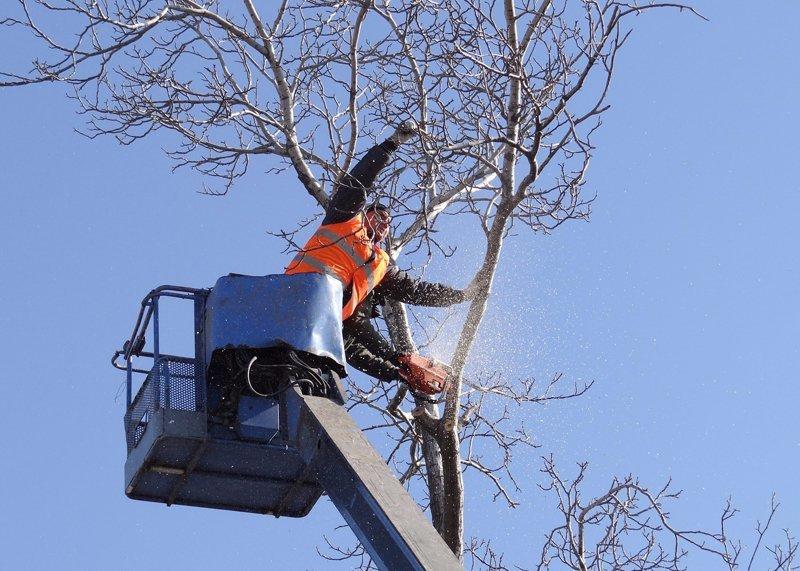Big R Tree Service | Tree Trimming