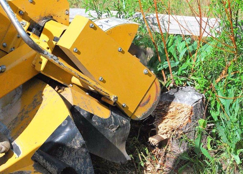 Big R Tree Service | Stump Grinding