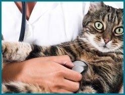 clinica per gatti