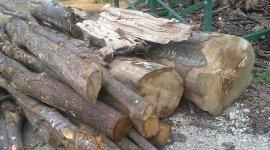 vendita legna, commercio legna, fornitura legna