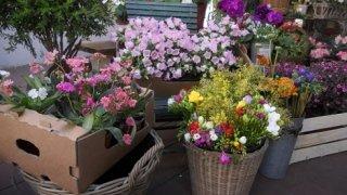 fioraio, allestimento floreale, noleggio fioriere per uffici