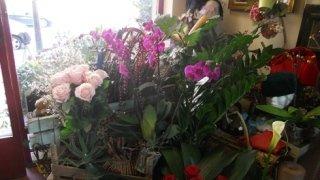 vendita splendidi fiori, commercio splendidi fiori, splendidi fiori vendita