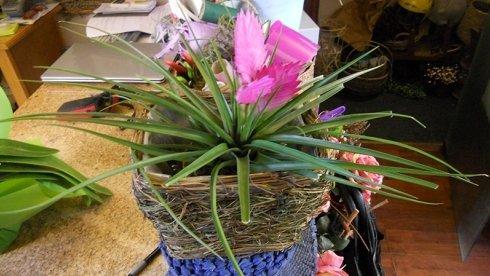 vendita piante, vendita fiori, negozio fiori