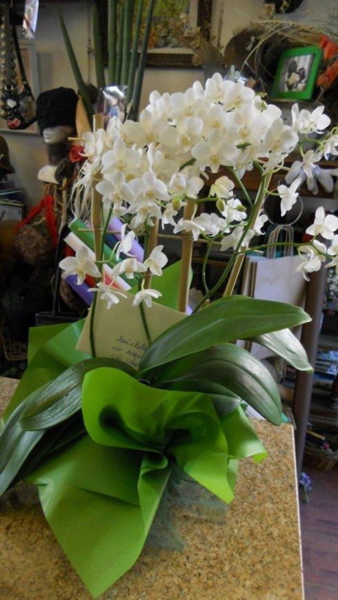 negozio piante, fiorista, fiori