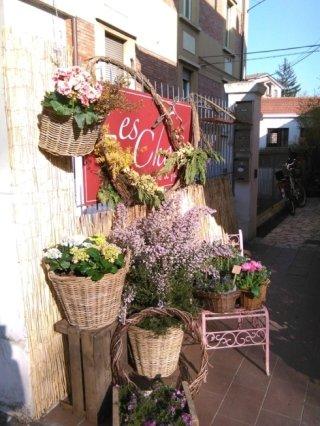 composizioni floreali, piante, fiorista