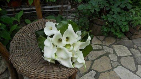 allestimento floreale, noleggio fioriere per uffici, vendita fiori