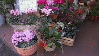 fiorista, negozio fiori, fiori vendita