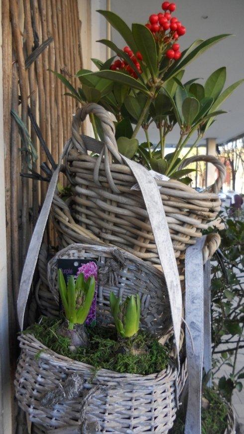 vendita piante, piante vendita, negozio piante