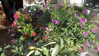 vendita piante e fiori, piante e fiori vendita, negozio piante e fiori