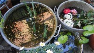 fiori, fioriere, giardinaggio