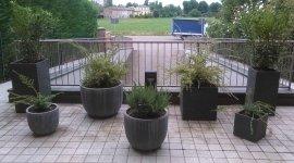 piante da esterno, vendita piante da esterno, fornitura piante da esterno