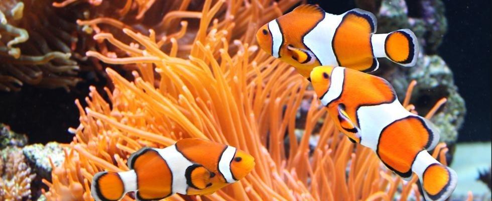 acquario ornamentale
