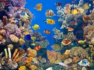 coralli per acquario