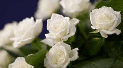 agenzia fiori